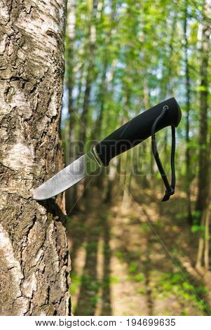 Knife stuck into a tree in forest