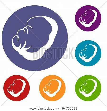 Spleen icons set in flat circle reb, blue and green color for web