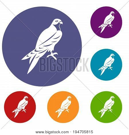 Falcon icons set in flat circle reb, blue and green color for web