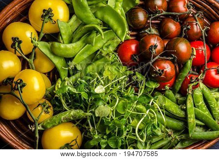 Red and yellow tomatoes, watercress salad and green pea on try. Harvest or clean healthy eating concept