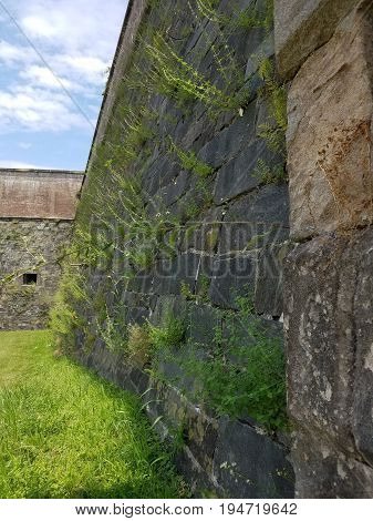 castle wall with green weeds growing out of it