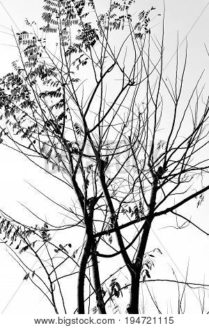 Image of Detailed tree branches (black and white)