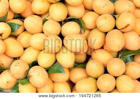 Marian plum or Maprang fruits of Thailand