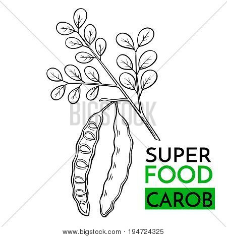 Hand drawn vector icon superfood carob. Sketch Illustration in vintage style. Design Template Healthy food.
