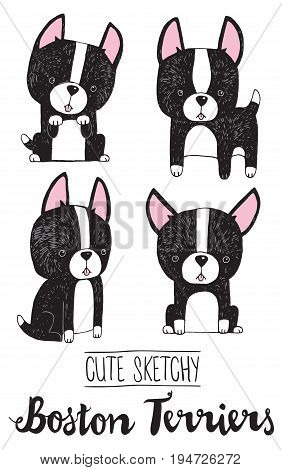 Cartoon black and white Boston Terriers drawn in a quirky sketchy style. Vector cartoon.