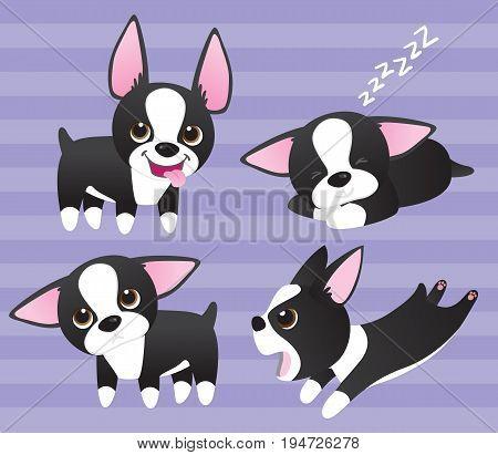 Boston Terrier puppies: Four cute cartoon black and white Boston Terrier pups
