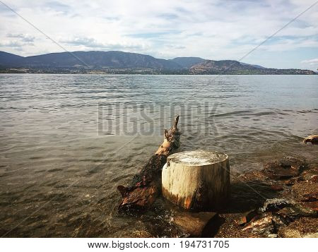 Driftwood And Tree Stump On Lake Shore