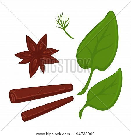 Cinnamon in stick and star shapes, small stem of dill and big leaves of basil isolated cartoon vector illustrations set on white background. Delicious natural herbal spices for meals seasoning.