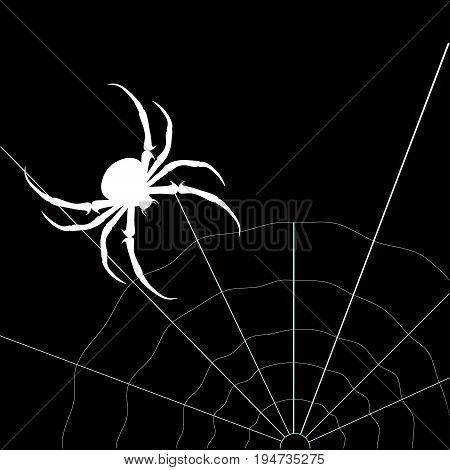 White spider and web on the black background. Vector silhouette