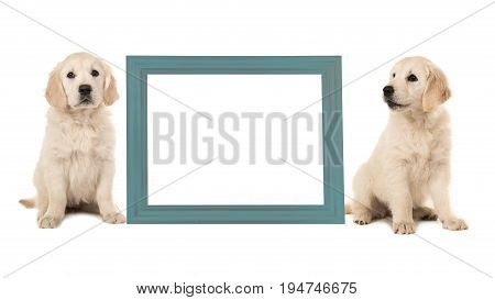 Two golden retriever puppy dogs sitting next to a blue empty picture frame isolated on a white background