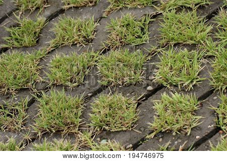 Grass on floor block for use as background.