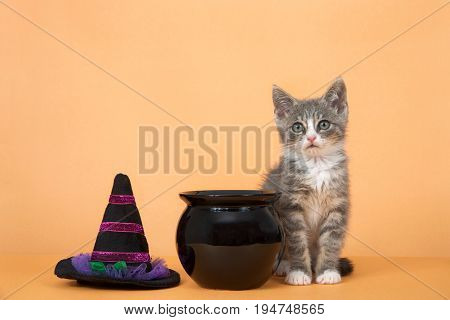 One small gray and white tabby kitten sitting next to black cauldron and witches hate on an orange background
