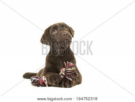 Brown labrador retriever puppy lying down seen from the front with its paws in front holing a knotted rope bone and looking up isolated on a white background
