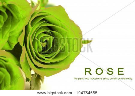 Fantasy green roses bouquet on white background.