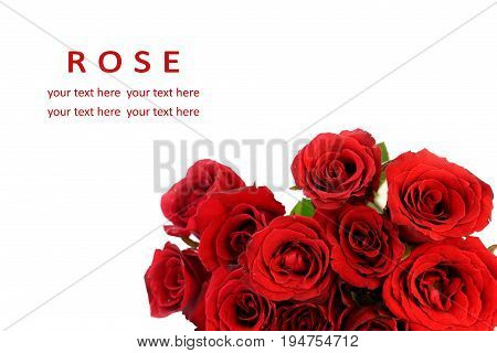 Red roses bouquet on white background greeting card.