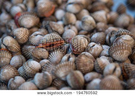 Fresh Raw Sea Cockles Clams At Seafood Market