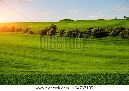 A Green Field, And A Small Forest Under A Blue Sky