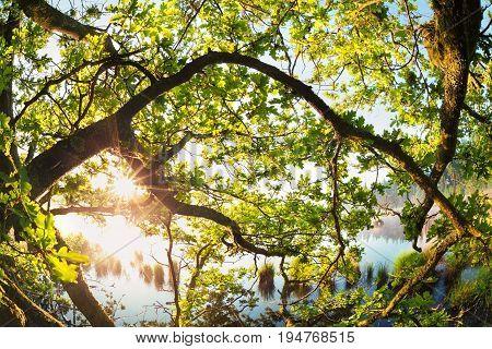 sunlight through oak tree branches in morning