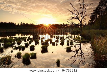 sunset over wild swamp with dry tree in summer