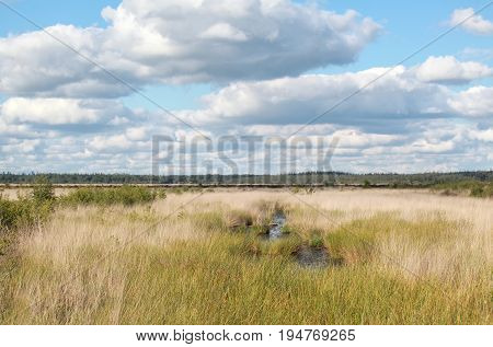 blue cloudy sky over marsh in summer