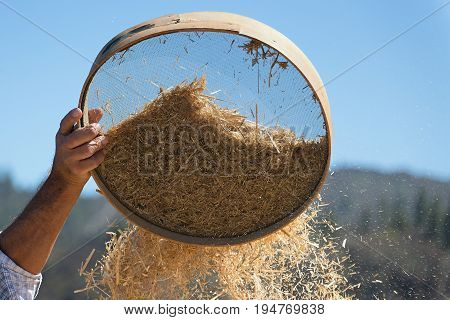 Old sieve for sifting flour and wheat,farmer sifts grains during harvesting time to remove chaff