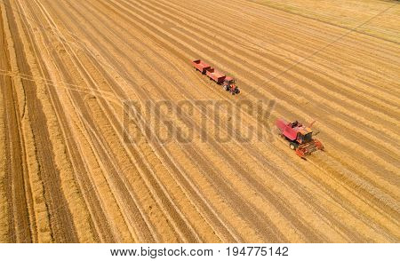 Combine Harvester And Tractor With Trailers In Wheat Field