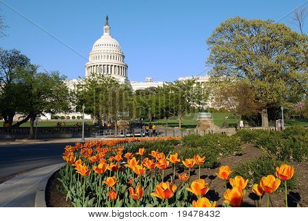 US Capitol and tulips