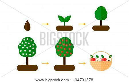 Vector Illustration. Growth Stages Of Apple Trees. Red Apples. B