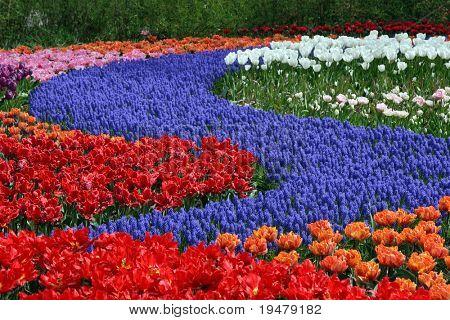 Multicolored flower carpet