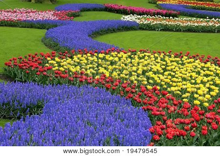 Multicolored flower bed, Keukenhof, the Netherlands