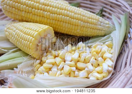 Closeup fresh sweet corn pods and corn kernels on wooden basket.