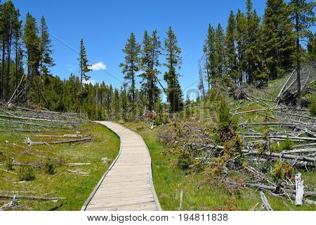 Boardwalk in the Mud Volcano Area of Yellowstone National Park.