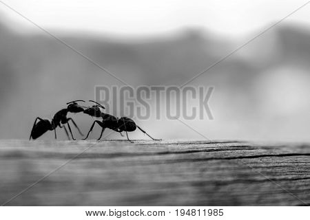 Love, two ants kissing eachother, love it's simple