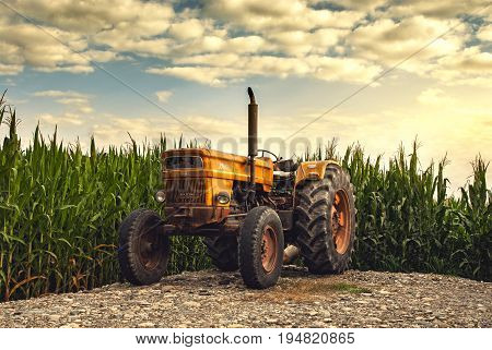Old tractor at sunset near unharvested corn fields