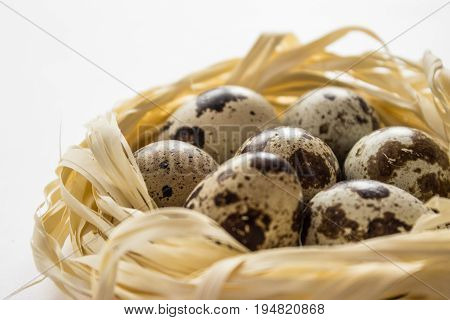 Several quail eggs in a straw decorative nest on a white background