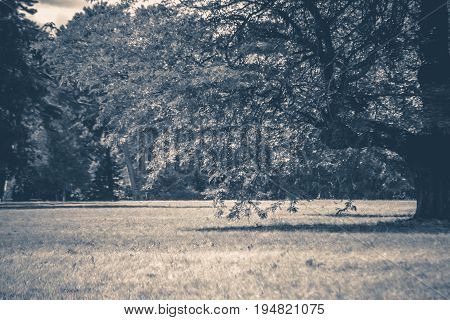 Old vintage photo. Field trees sky clouds summer nature.copy spase space for text.