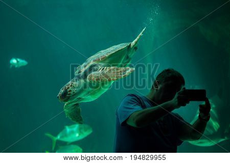 MADRID, SPAIN - JULY 6, 2016: Visitor makes a selfie while the loggerhead sea turtle (Caretta caretta), also known as the loggerhead swimming in Madrid Aquarium, Spain.