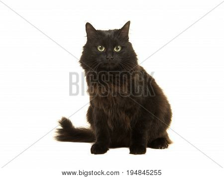 Pretty long haired black cat sitting facing the camera isolated on a white background