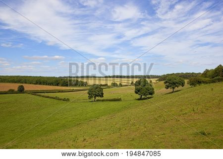 English Landscape And Oak Trees