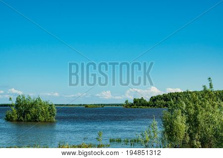 Summer landscape. A river flood. Water flooded green willow bushes.