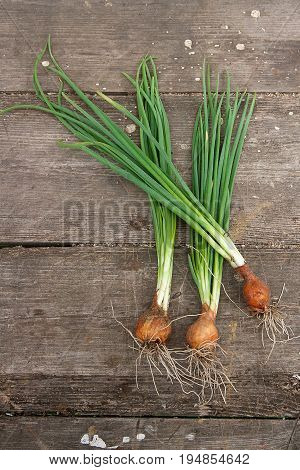 Spring Onions, Harvested Vegetables On Vintage Wooden Background..