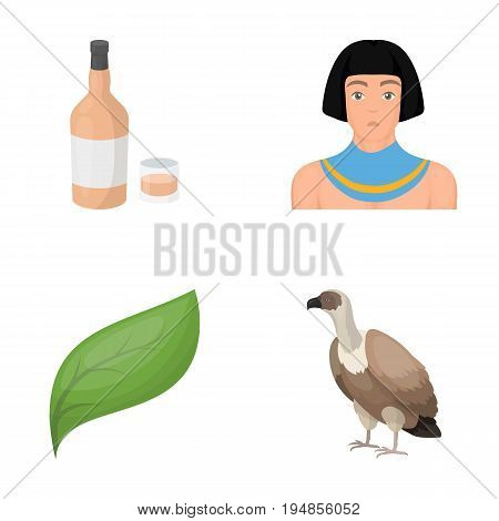 alcohol, ecology and other  icon in cartoon style.history, animal icons in set collection.