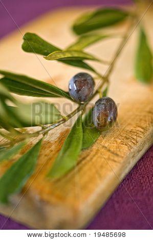 close up on black olives on branch