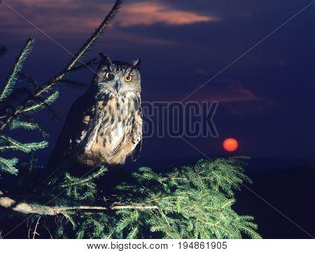 Owl Perching on Tree Branch