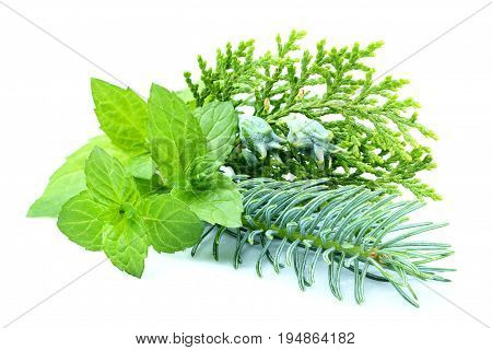 Composition of spruce.Sprucefirjunipermint isolated on a white background.