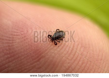 Small mite at the tip of a finger macro