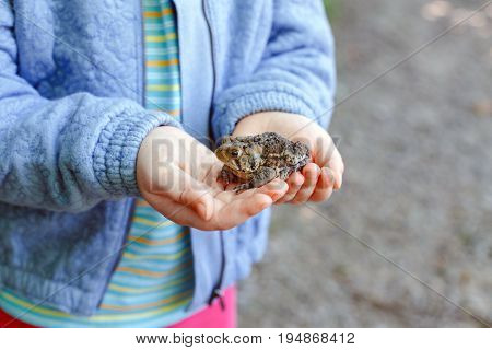 Closeup of Caucasian kid child hands holding small green brown forest frog outside on summer autumn day
