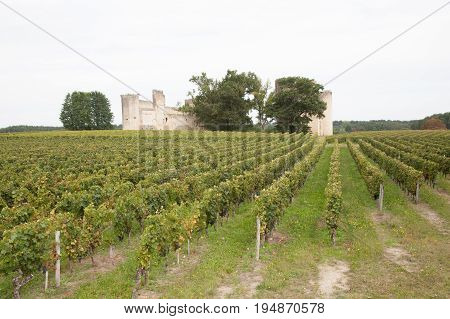 The Grapes Farm Of Bordeaux Valley, Sunset Time In Medoc France