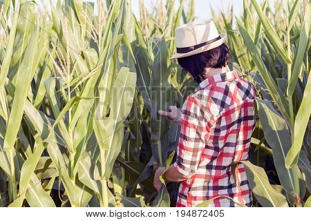 Examines The Quality Of Young Corn