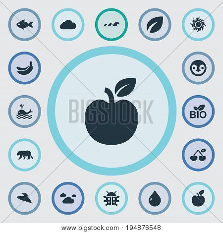 Vector Illustration Set Of Simple Ecology Icons. Elements Clouds, Berry, Leafage And Other Synonyms Cherry, Bear And Drop.